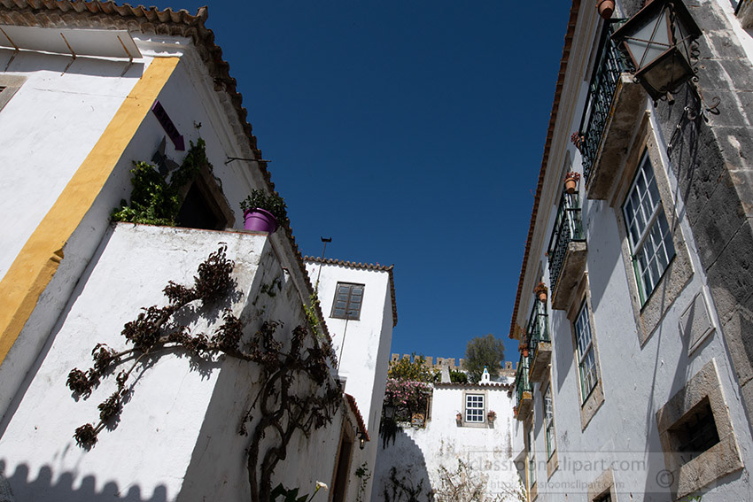 vines-on-exterior-white-washed-walls-home-obidos-portugal_8504040-2.jpg