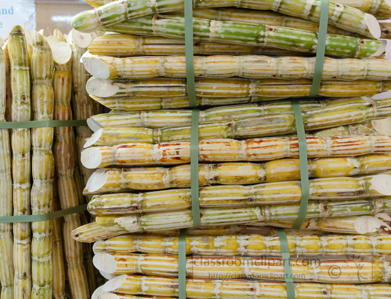 sugar-cane-at-local-market-signapore-3210b.jpg