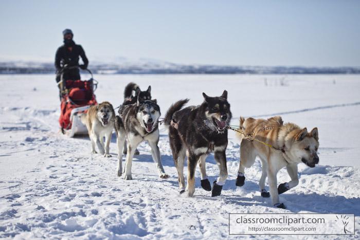 alaska_dogs_sled.jpg