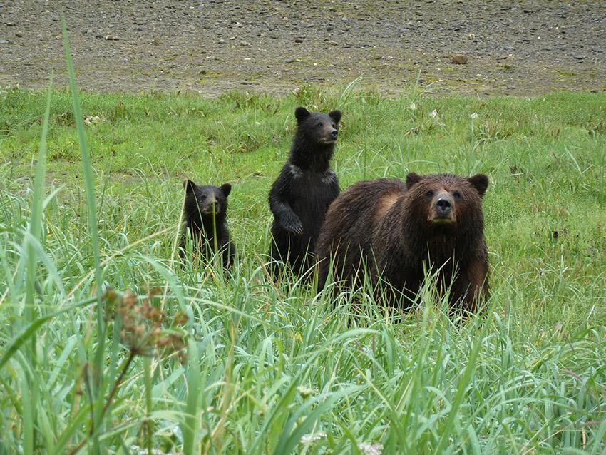 kootznoowoo-wilderness-admiralty-island-tongass-national-forest-alaska.jpg