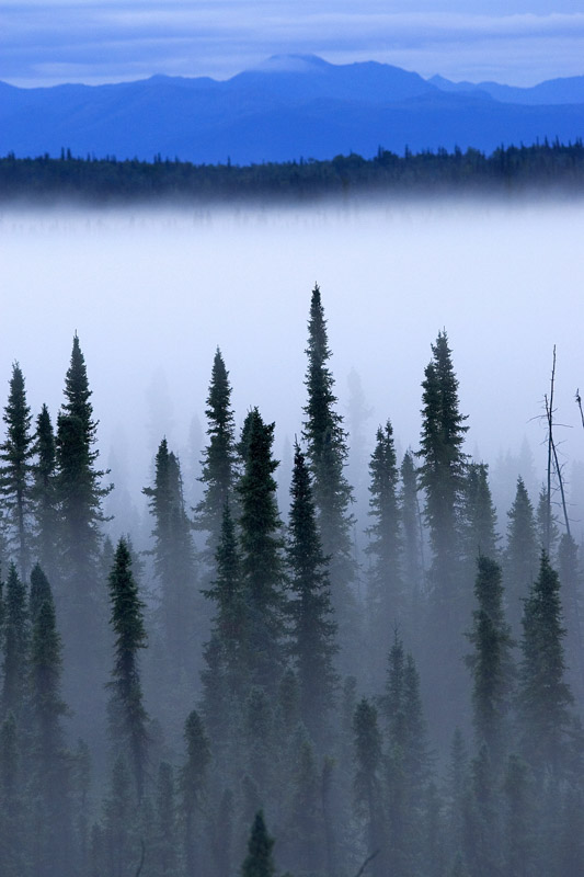photo-fog-covering-trees-and-mountains-a-beautiful-landscape-in-alaska.jpg