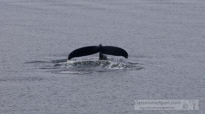 viewing-whales-alaska_580.jpg