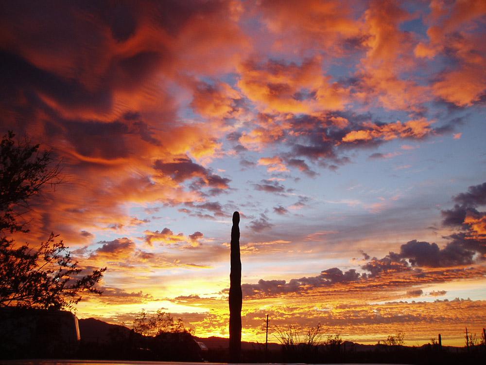 sunset_cactus.jpg