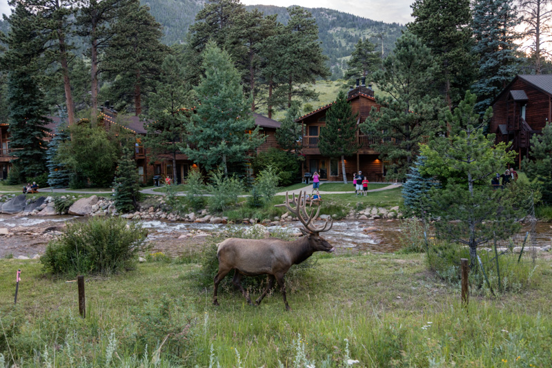 elk-rocky-mountain-national-park.jpg