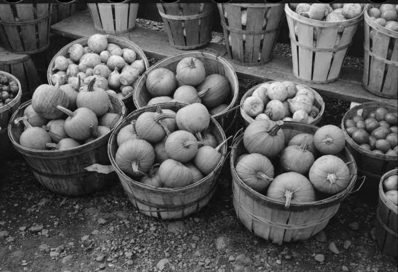 pumpkins-and-turnips-near-berlin-connecticut.jpg