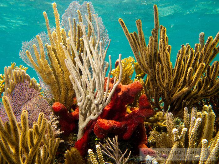 coral_florida.jpg
