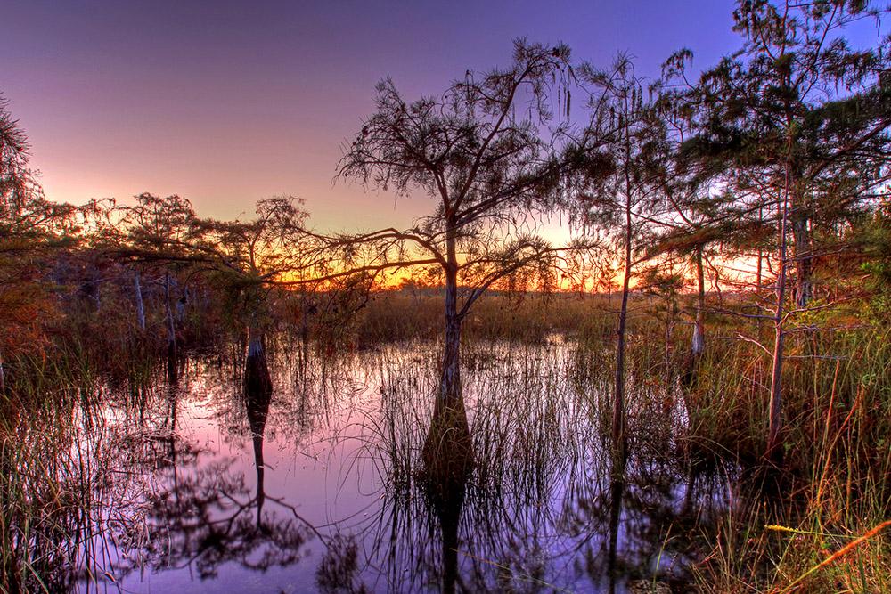 cypress-trees-sunset-everglades-florida.jpg