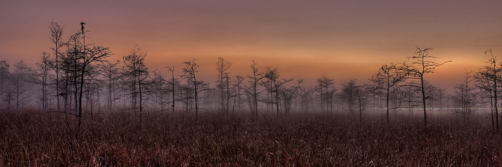 dew-in-the-morning-everglades-florida.jpg