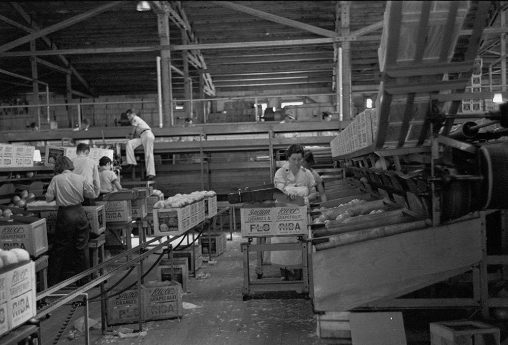 scene-in-the-packing-plant-at-fort-pierce-florida-1937.jpg