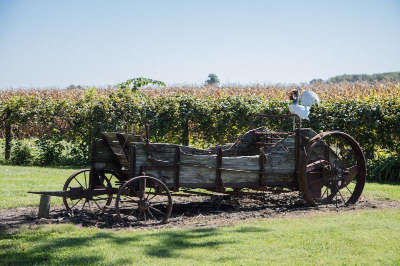 chicken-on-an-old-wagon-on-a-hendricks-county-indiana-farm.jpg