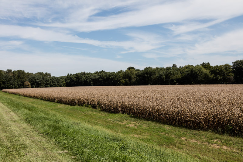 corn-field-ready-for-harvest-indiana.jpg