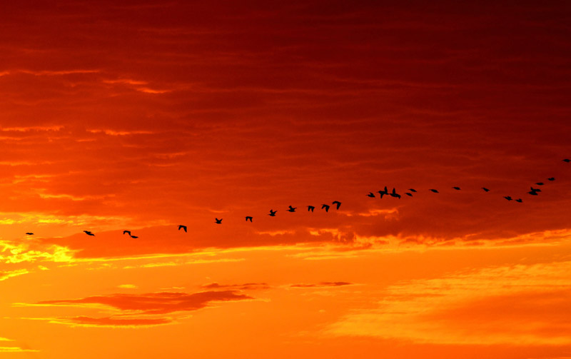 photo-sunrise-at-the-quivira-national-wildlife-refuge-in-kansas.jpg