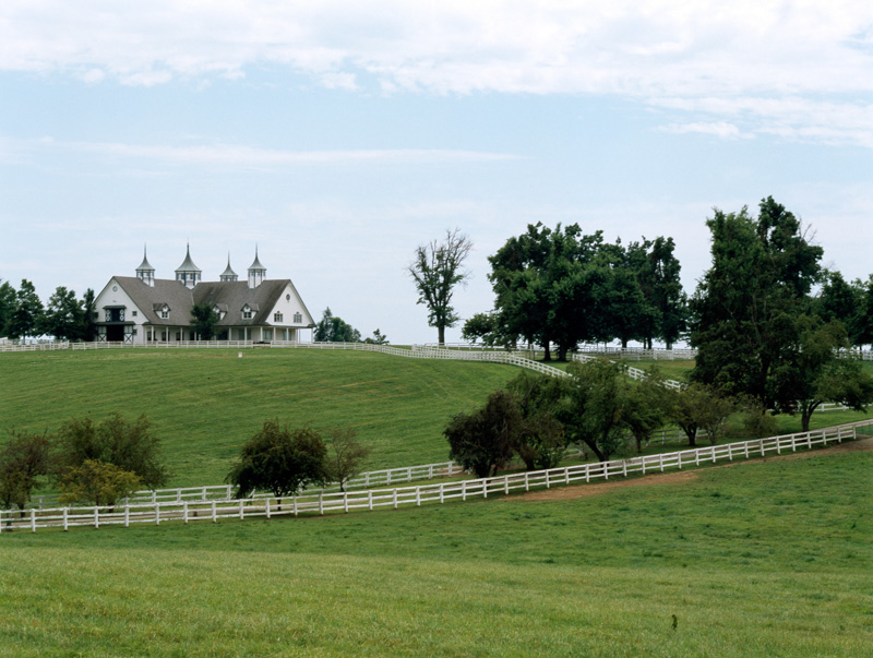 horses-graze-on-a-farm-in-bluegrass-horse-country-lexington-kentucky.jpg
