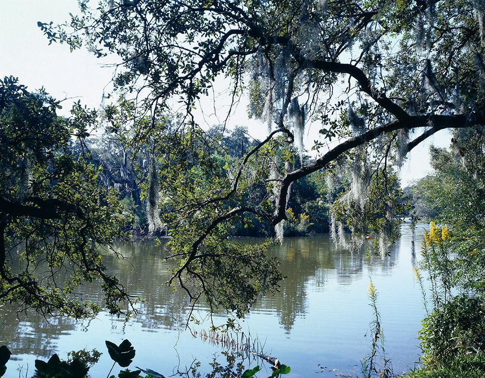 city-park-new-orleans-louisiana.jpg
