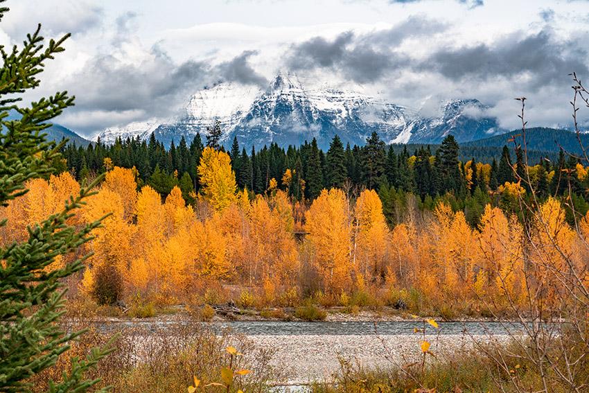 lfathead-national-forest-fall-foliage-in-montana.jpg