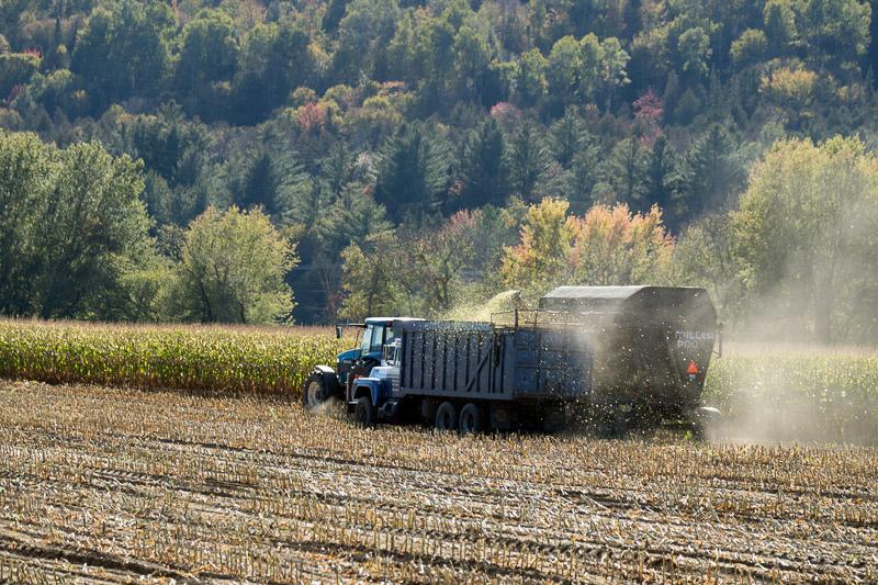 photo-harvesting-fodder-stripped-cornstalk.jpg