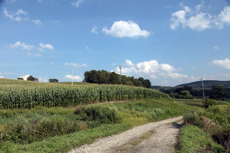 photo-rural-corn-field-near-sussex-new-jersey.jpg