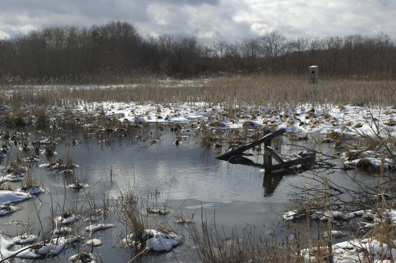 photo-winter-view-of-water-and-open-marsh-new-jersey.jpg