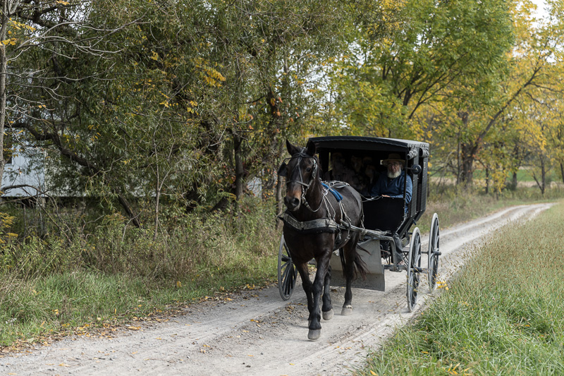a-horse-drawn-amish-buggy-journeys-down-a-country-road-at-yoders-amish-home-1.jpg