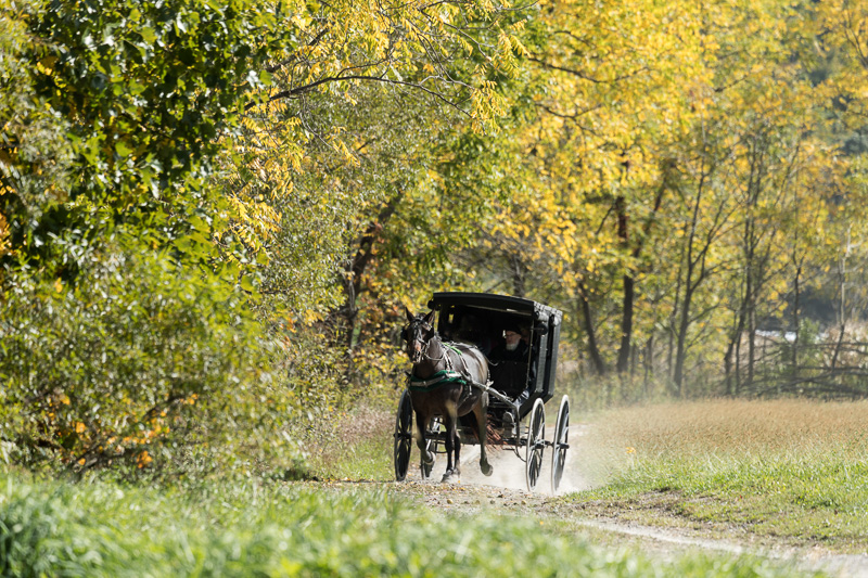 a-horse-drawn-amish-buggy-journeys-down-a-country-road-at-yoders-amish-home.jpg