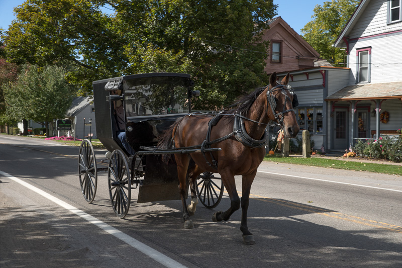 an-amish-horse-buggy-and-riders-roll-through-winesburg-ohio.jpg