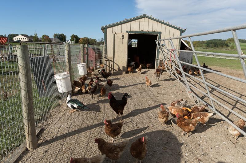 barns-and-horse-drawn-buggies-and-farm-wagons-at-yoders-amish-home-2.jpg