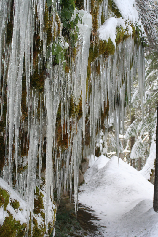 plants-covered-with-icicles-oregon.jpg