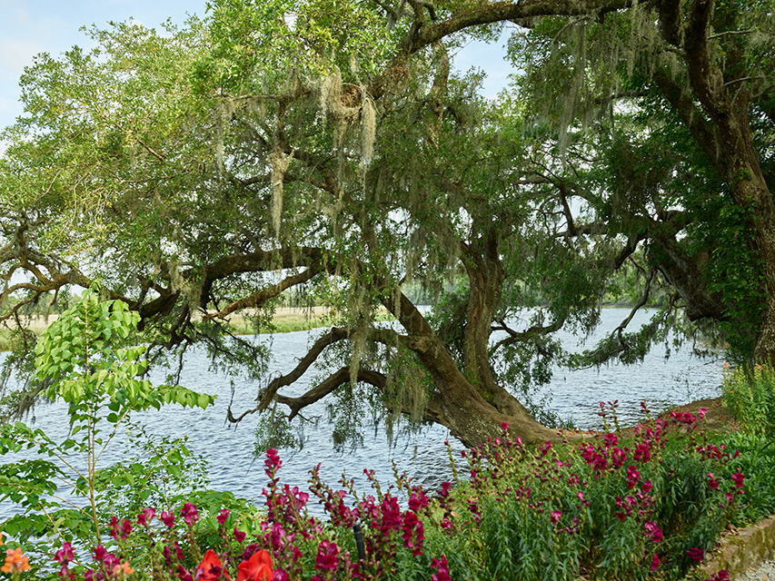 grounds-of-the-magnolia-house-and-gardens-plantation-site-in-north-charleston-south-carolina.jpg