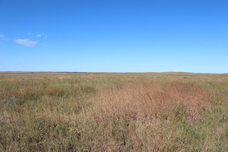 photo-native-prairie-and-grasslands-dakota.jpg