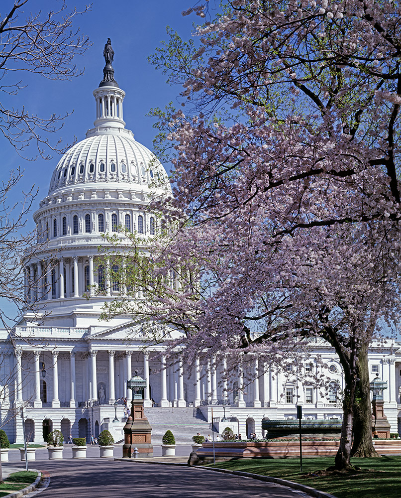 spring-day-trees-in-bloom-at-the-us-capitol.jpg