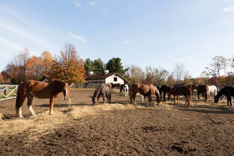 photo-riding-horses-at-pipestem-resort-state-park-in-mercer-county-west-virginia.jpg