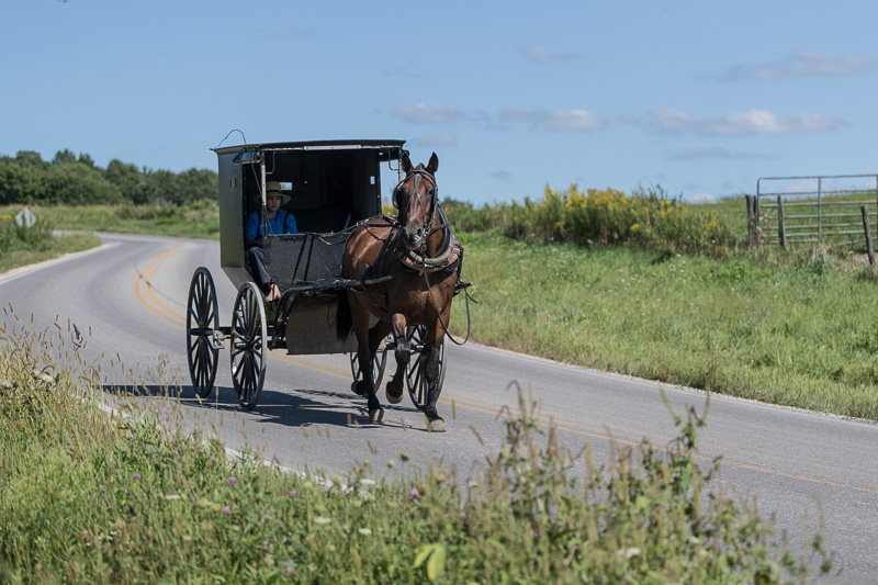amish-boy-in-an-old-fashioned-black-buggy.jpg