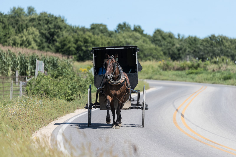 amish-woman-in-an-old-fashioned-black-buggy.jpg