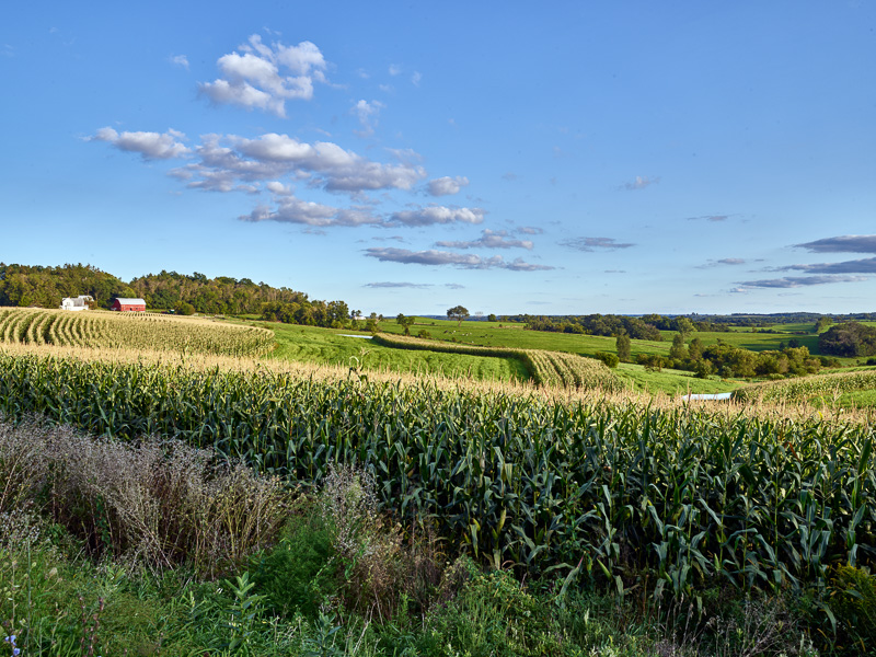 cornfields-in-the-rolling-hills-of-crawford-county-wisconsin.jpg