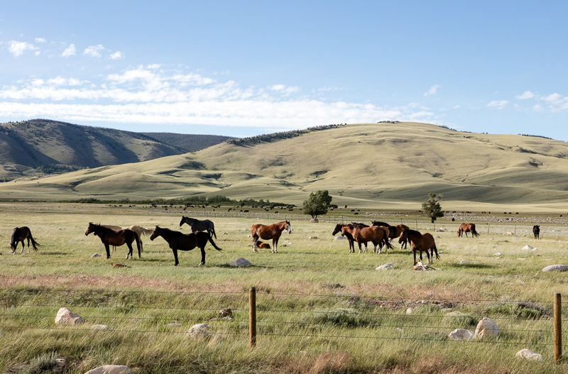 herd-of-horses-on-the-laramie-plain-wyoming.jpg