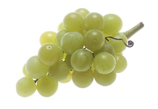 grapesA.jpg