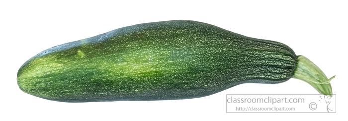 zucchini-summer-squash-photo-object.jpg