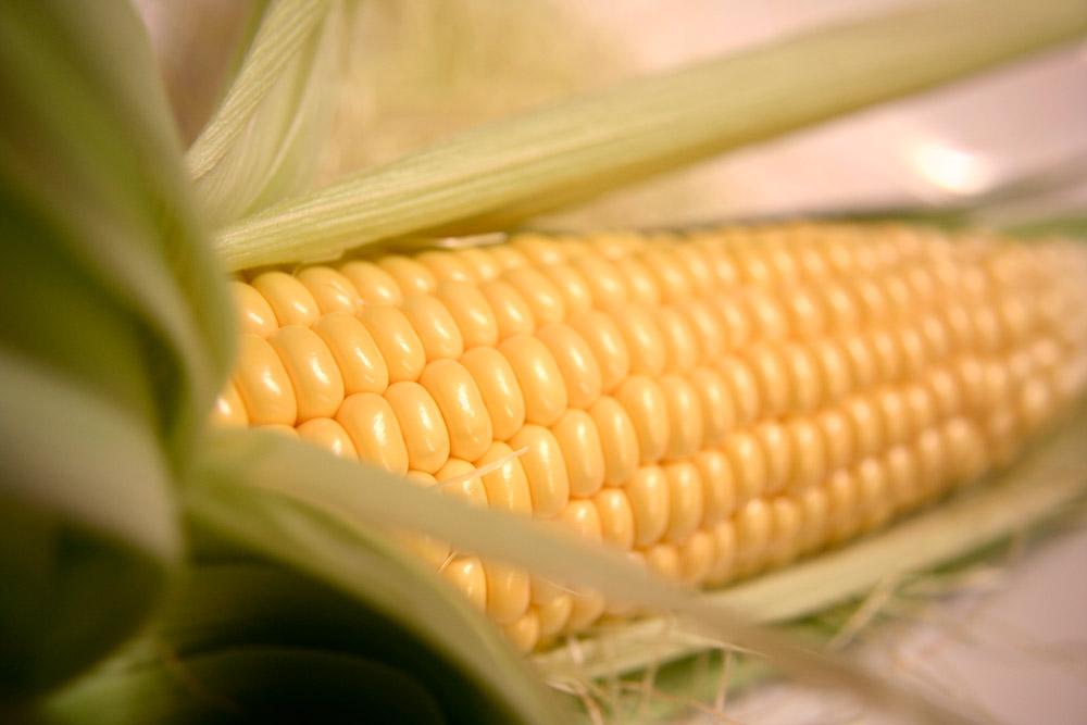 corn_219.jpg
