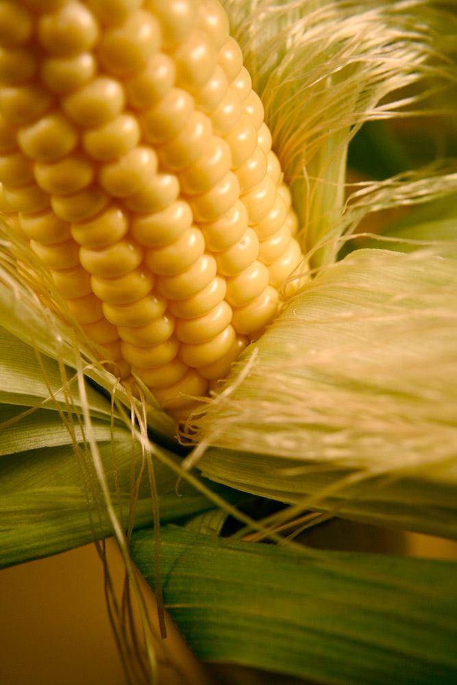 corn_with_husk_211.jpg