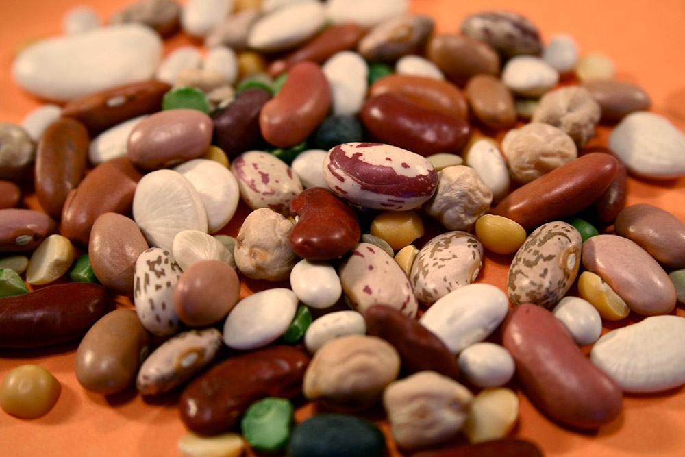 dry_beans_396.jpg