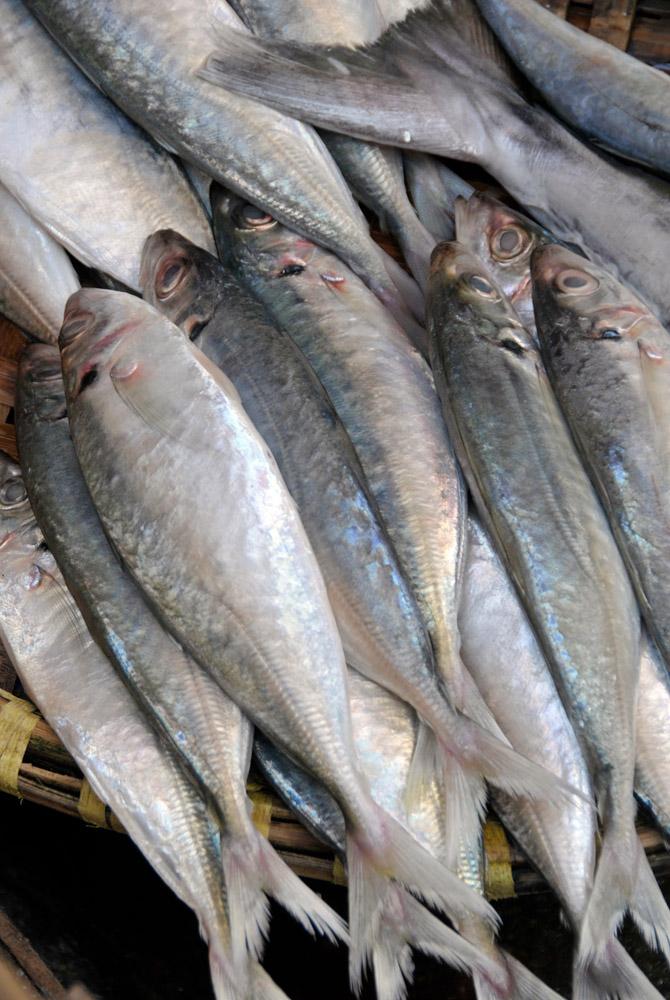 Fish for sale hanoi_14.jpg