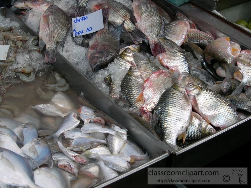 raw-fresh-fish-for-sale-picture043A-2015.jpg