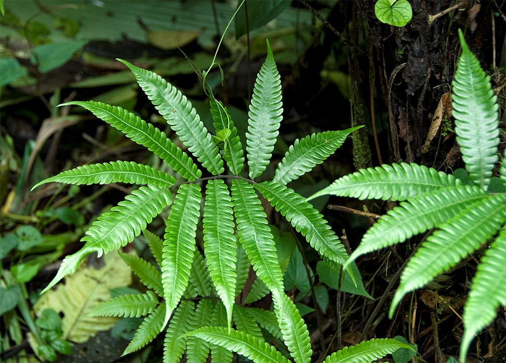 ferns-growing-rainforest-costa-rica-492.jpg