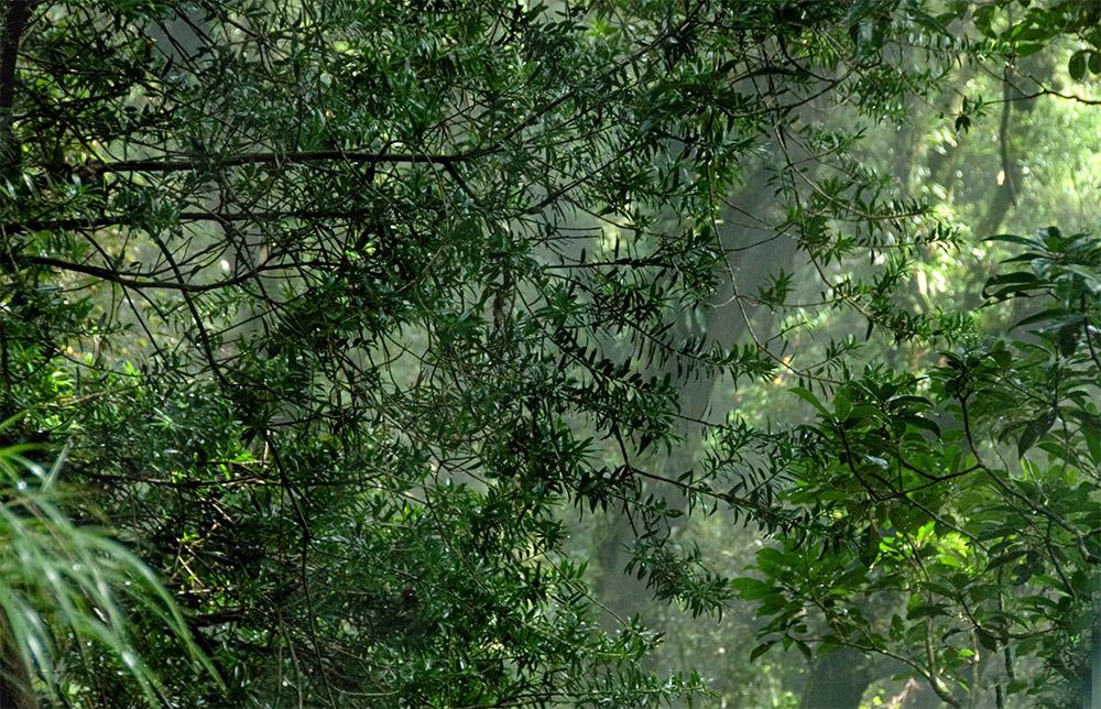 sunlight-entering-tree-canopy-in-rain-forest.jpg