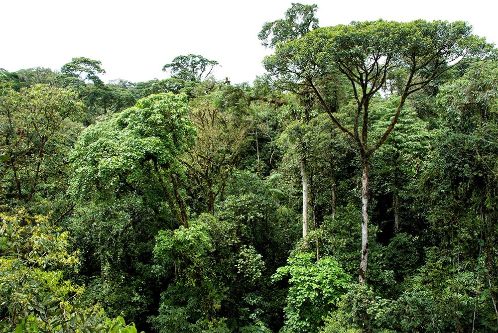 tree-tops-rain-forest-costa-rica-475.jpg