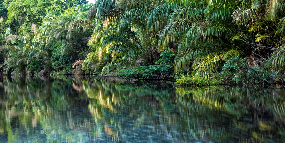 tropical-rain-forest-relected-in-river-costa-rica.jpg