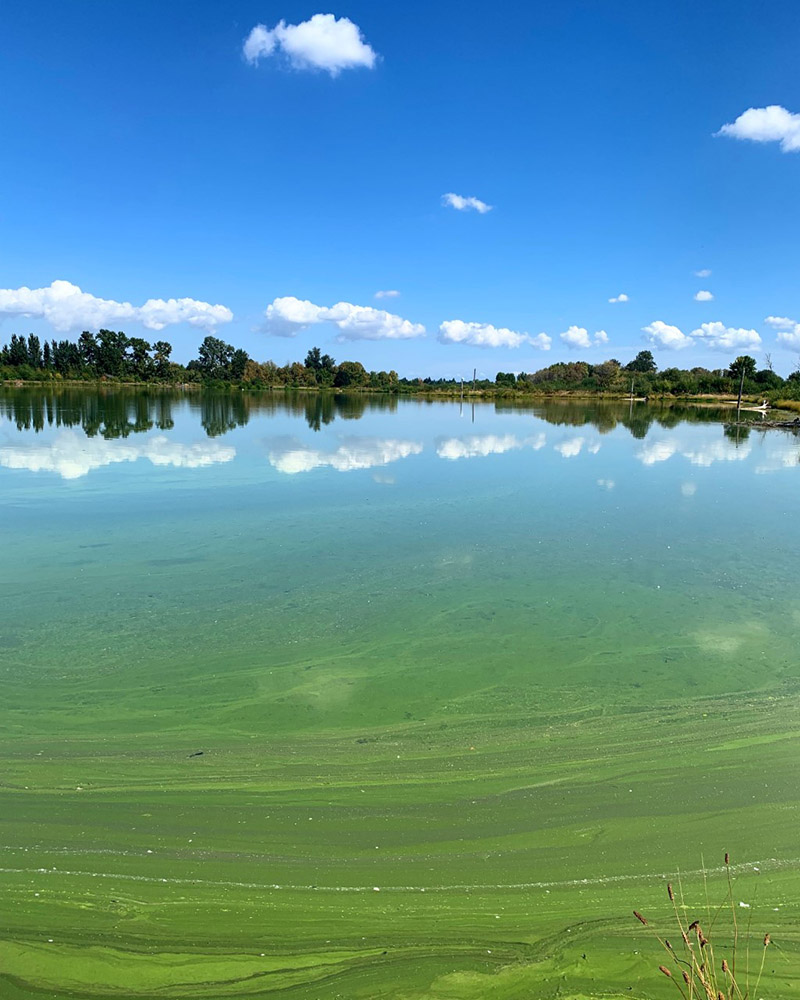 view-of-lake-at-fernhill-natural-treatment-wetlands.jpg