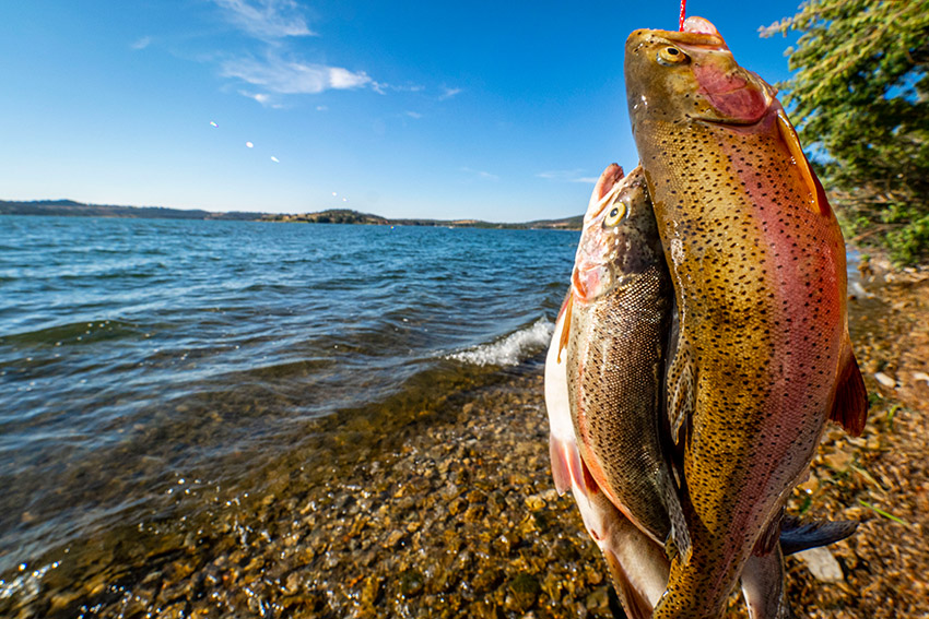 catches-of-two-trouts-in-at-lake-in-montana.jpg