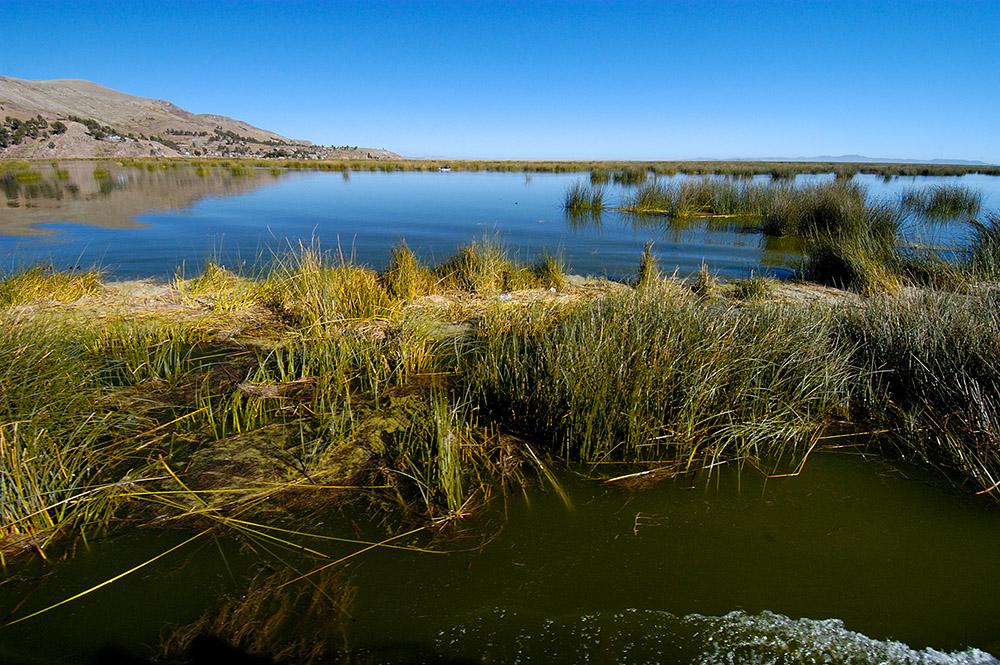 tortora-reeds-growing-in-lake-titicaca.jpg