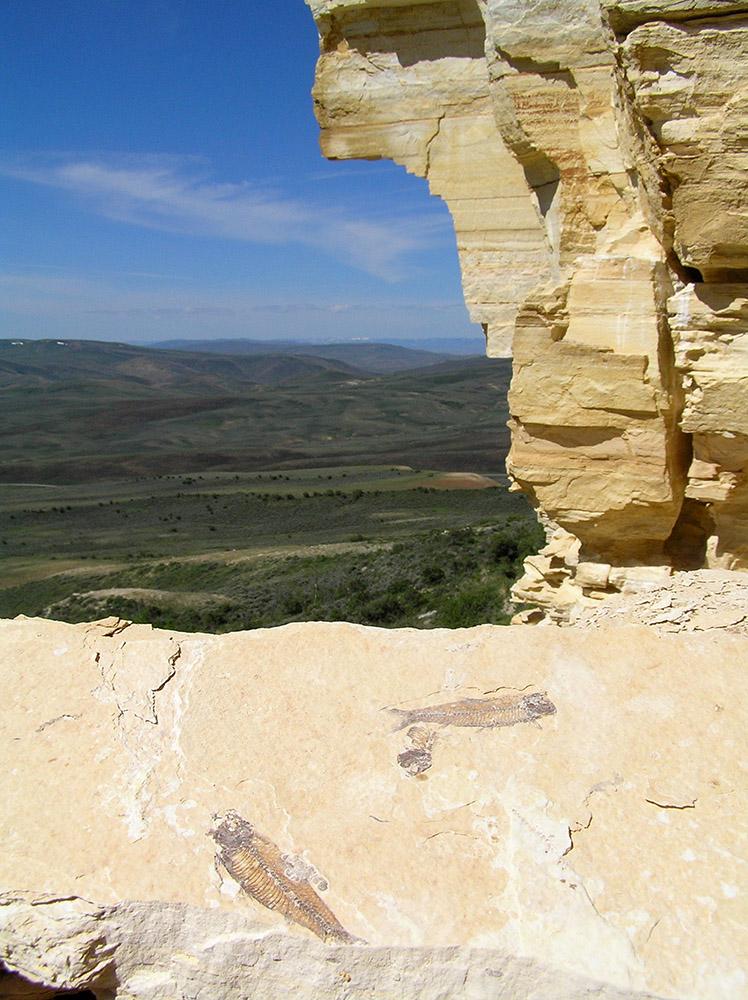 fossils-on-the-ridge.jpg